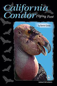 California Condor: Flying Free