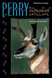 Perry: A Pronghorn Antelope