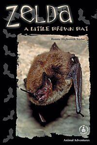 Zelda: A Little Brown Bat