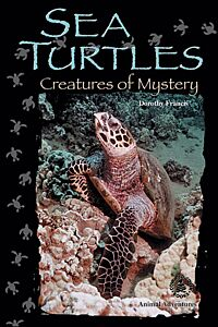 Sea Turtles: Creatures of Mystery