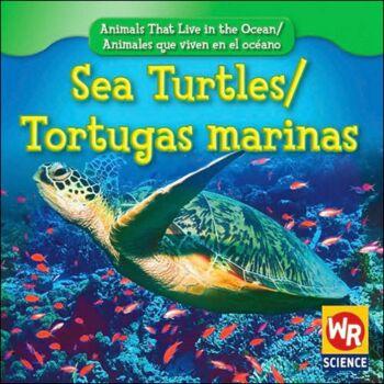 Sea Turtles / Tortugas marinas