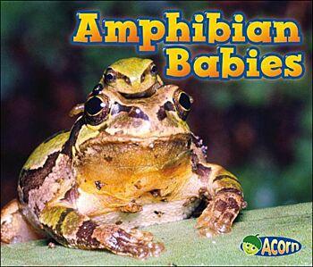 Amphibian Babies