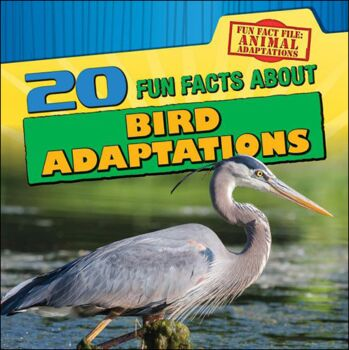 20 Fun Facts About Bird Adaptations